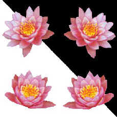 waterlilies.jpg (21119 bytes)